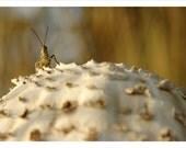 grasshoppers mushroom - fine art print (4x6 8x12 12x18)