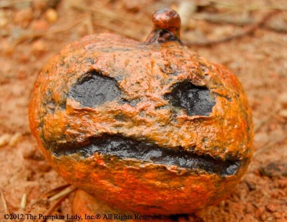 Zombie Pet Pumpkin - Fred