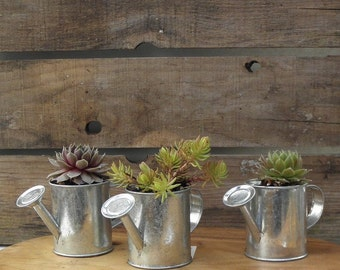 Watering Can Favors With a Colorful Collection of  Succulents, Great Wedding, Garden Party, Seating Markers, Shower Favors