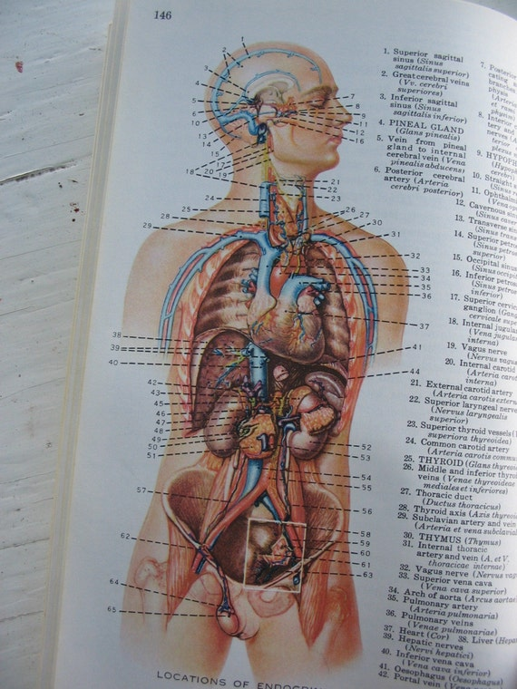 Human Anatomy Vintage Vintage 1961s Human Anatomy