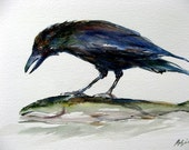 Crow eats fish eye... 8X10 Watercolor Art Print by Barry Singer