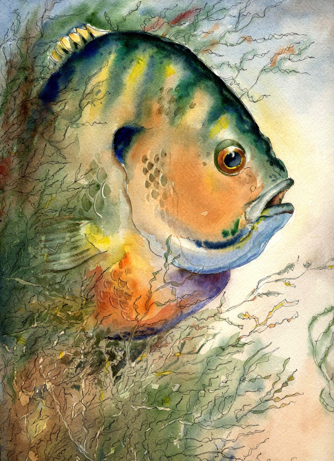 bluegill fish original watercolor 9x12 by artist barry singer