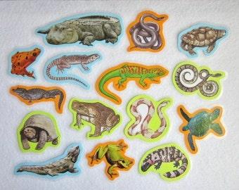 Felt Board Set, Reptiles and Amphibians, Reptiles Flannel Board, Science Felt Board Set, Homeschool, Classroom Resources