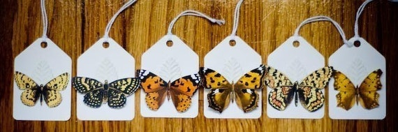 Tag, You're It - Fantaisie Papillon Tags