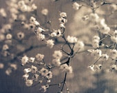 flowers photo baby's breath sepia white-Softness fine art photograph 7x10