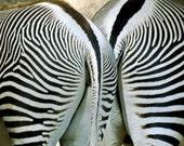 ACEO art card metallic photography award winning Zebra Stripes