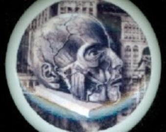 After Midnight CREEPY Halloween ANATOMY of a SKULL Head on Stand Ceramic Drawer Knob