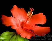 Note Card - Glowing Hibiscus