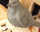 Gray Bird with Warm Fringe