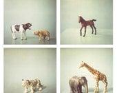 Childrens wall art, boys room art, nursery art, animals, blue, tiger, giraffe, cow, horse, elephant, pig, brown, white - Set of 4 5x5 Photos