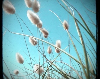 Turquoise beach willow photo, summer seaside photo, pussywillow, bright blue sky, beach decor, ttv, beach wall art - Waiting to be Picked