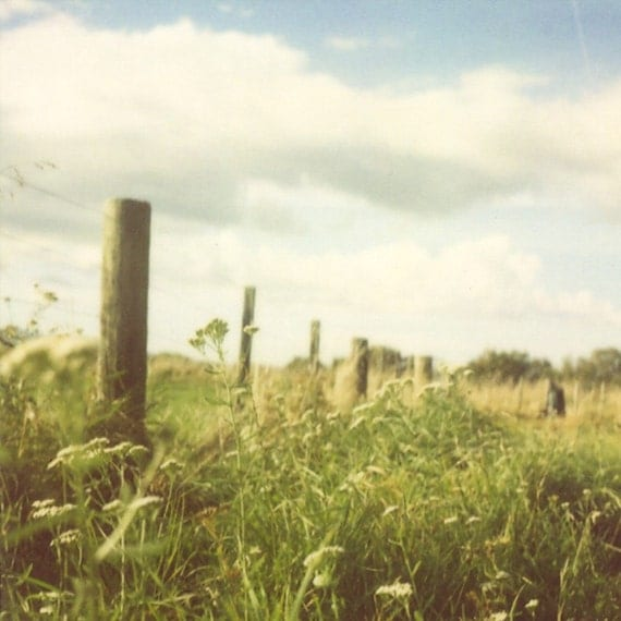 Landscape photography, country photo, polaroid, summer, sky, green grass, queen annes lace, shabby chic decor - Under a Country Sky