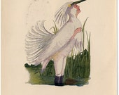 Heron /Partridge-008