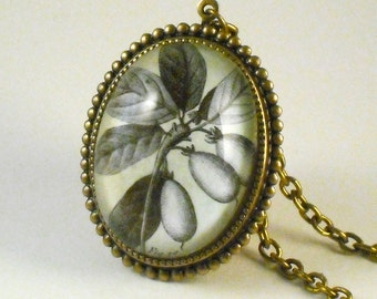 Olive You- vintage inspired olive tree specimen drawing cameo necklace