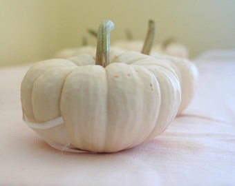 Fall Wedding Decor 25 Mini White Pumpkins for Table Decor for late Summer or Fall Weddings