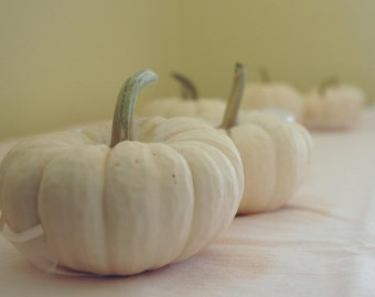 15 Mini Baby Boo Pumpkins Fall Weddings, Halloween,Thanksgiving, Fall and Winter Decor