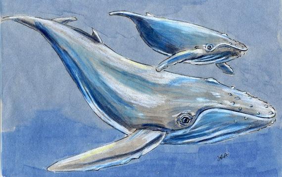 Items similar to Humpback Whale (Megaptera novaeangliae ...