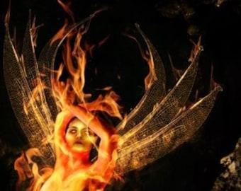 Firefly Fairy Photo Print