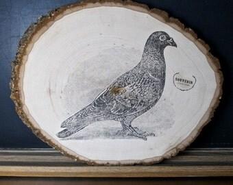 Pigeon Plaque