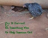 Crochet Winter Hat  pattern PIF - Pay It Forward