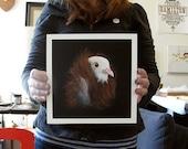 Fancy Pigeon - art print