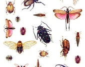 Bugs Insects Images Digital Collage Sheet Download GreatMusings No. 306