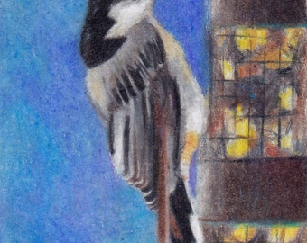White Breasted Nuthatch Original aceo