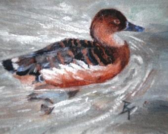 Duck Swimming aceo Original