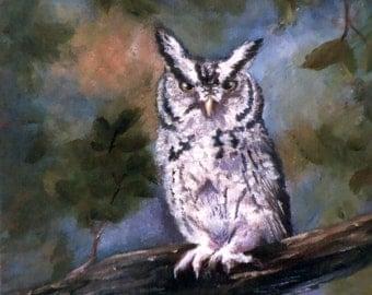 Screech Owl Original 8x10 Oil Painting