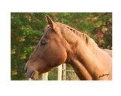 Chestnut Quarter Horse Note Card