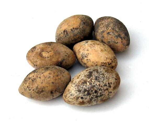 Egg Gourds 6 Jumbos for Crafting or Primitive Rustic Bowl or Basket Filler