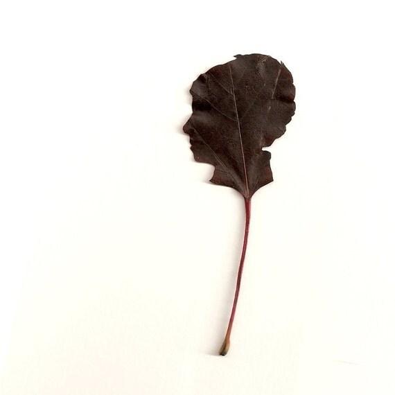 Leaf Silhouette Freehand