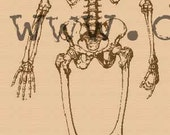 P19 skeleton rubber stamp WM large
