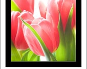 CLOSING 50% OFF SALE Large Tender Tulip Roll-On Perfume Oil by Seattle Scents