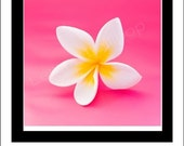 CLOSING 50% OFF SALE Large Plumeria Paradise Roll-On Perfume Oil by Seattle Scents - 1/3 oz Large