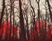 Nature Photography, The Red Forest, 5x7 Photo, Dramatic Autumn Leaves, Dark Woods
