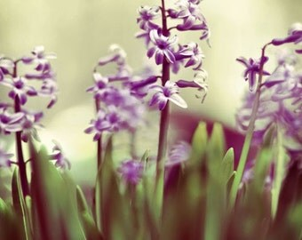 Hyacinth Photograph, Purple Flowers, Nature Photography, Spring Flowers Photo, Home Decor, Bedroom Art