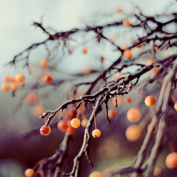 Nature Photography, Marzipan, 5x5 Photograph, Winter Berries, Bare Tree Branches, Winter Decor