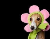 Flower Dog Hat Bloomin Hatz4Brats Featured on Cute Overload