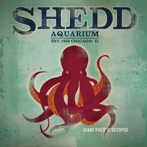 Shedd Aquarium Chicago Octopus Canvas Artwork Graphic 12 X 12