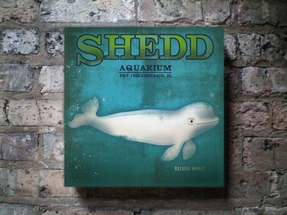Shedd Aquarium Beluga Whale Chicago poster style collage art on vintage canvas