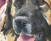 Leonberger Original Watercolor Painting Dog Art