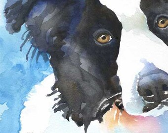 Border Collie Art Print of Original Watercolor Painting - 11x14 Dog Art