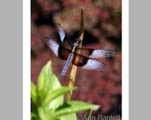 Dragonfly Photo No. 1 - 5 Blank Note Cards With White Envelopes - Ranlett