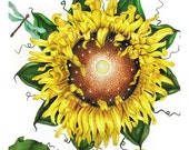 SUNFLOWER w Dragonfly, FANTASY, ARCHIVAL HIGH QUALITY ART PRINT, WATERCOLOR, 8 X 10
