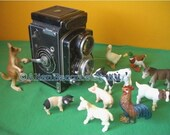 Class Picture Photo 8x10 Photograph of Animals on Picture Day Fine Art Miniature Photography ((BA))