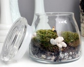 How to Keep A Man Live Moss Terrarium - Includes Simple Care Instructions - 211