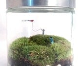 A Windy Day  - Includes Simple Moss Terrarium Care Instructions