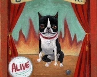 Circus Sideshow - Boston Terrier dog art print