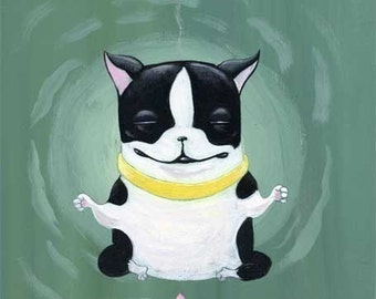 Boston terrier doing a little yoga to relax